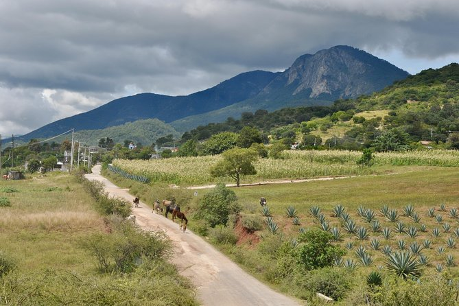 Immerse into the real Mexico & Oaxaca