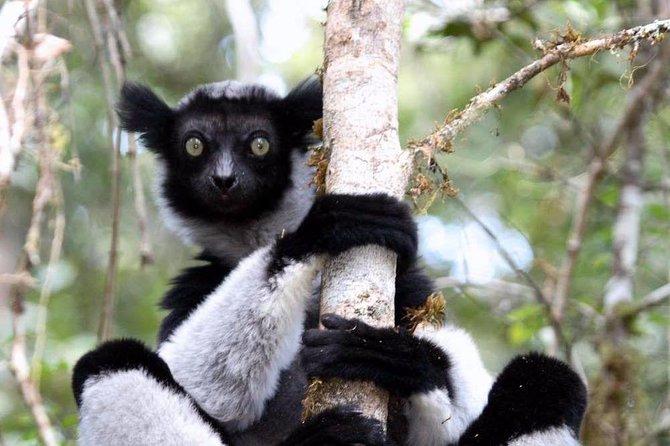 Day trip to Andasibe Lemurs