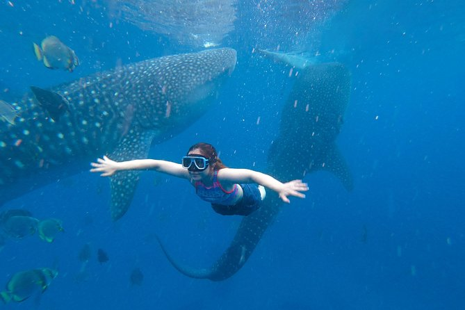 Whale Shark Encounter and Tumalog Falls Tour including Use of GoPro photo 1