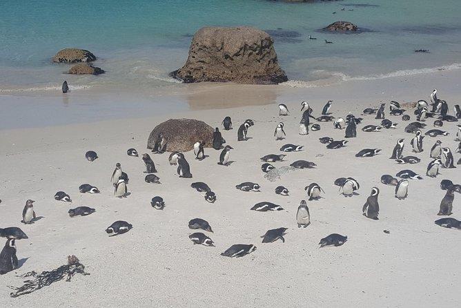 Half day penguin colony tour,