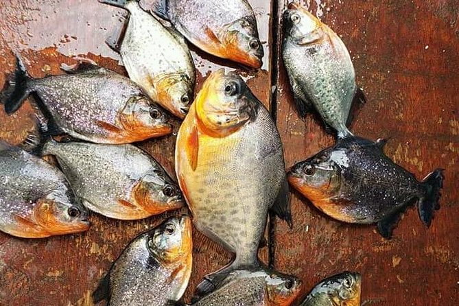 Fish in the Amazon River
