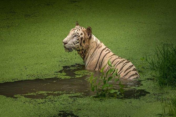 Private Tour - 4 Days tour to Sundarbans from Kolkata