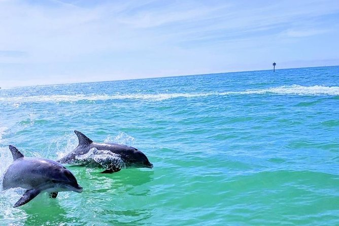 Dolphin Watch Cruise With Snorkeling To