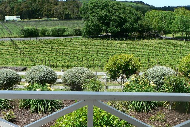 Auckland Shore Excursion: West Coast Wineries Tour