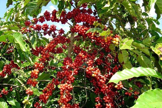 Lake Atitlan - Coffee Tour