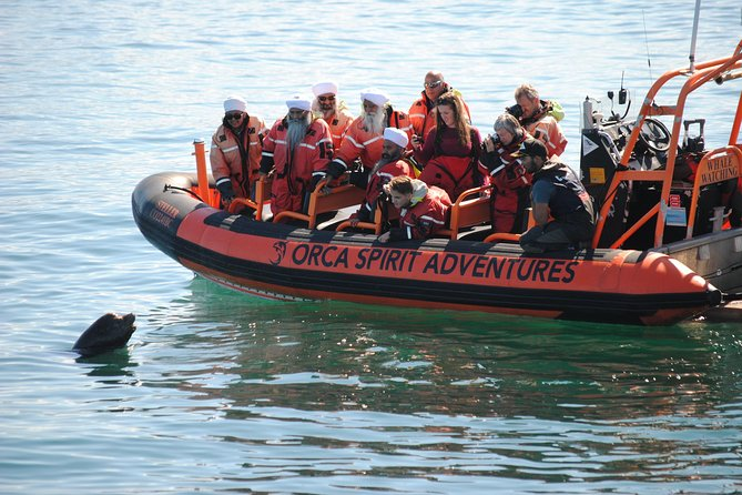 Zodiac Marine Wildlife Excursion from Victoria
