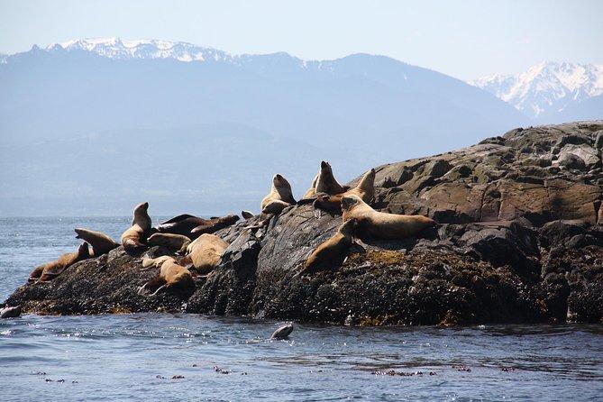 Zodiac Marine Wildlife Excursion from Victoria, Isla de Vancouver, CANADA