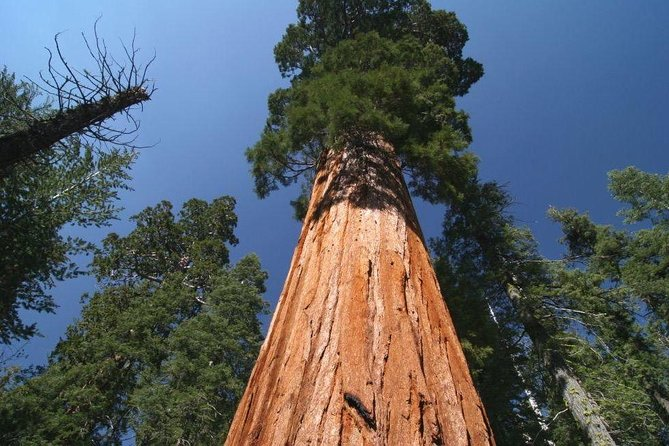 Sequoia National Park adventures