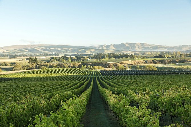 A Waipara Wine Experience with Giles Tours, includes wine tastings and lunch