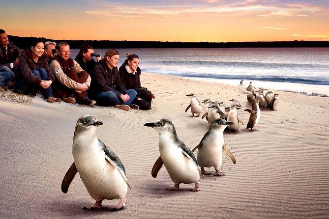 "[Private Tour] ""Penguin Parade"" Phillip Island Tour."