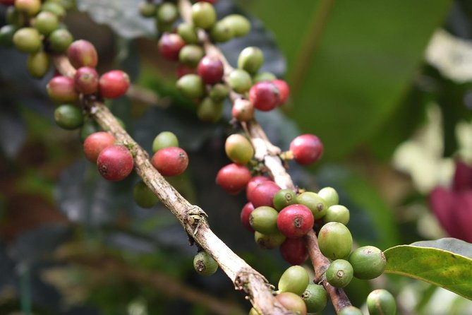 Private Day Trip to Minca - Organic Coffee Farm Tour and Waterfalls