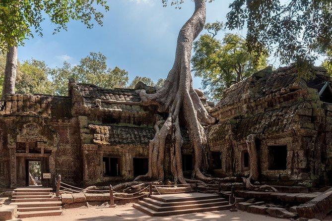 Explore Angkor Wat and Ta Phrom in depth