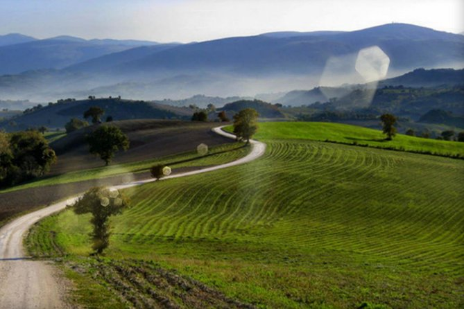 New Euganean Hills Experience - Olive Oil & Wine Tour