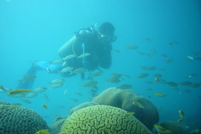 Diving in Tayrona National Natural Park
