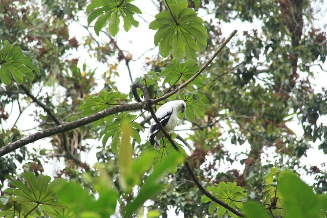 The Best Birdwatching tour inside the Arenal Volcano photo 17