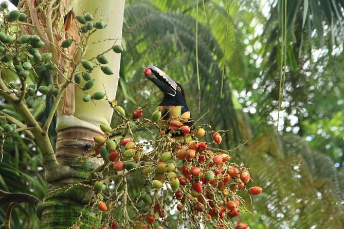 The Best Birdwatching tour inside the Arenal Volcano photo 15