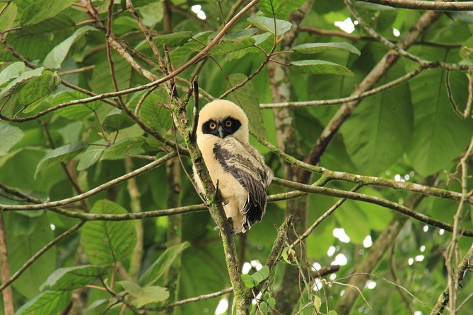 The Best Birdwatching tour inside the Arenal Volcano photo 3