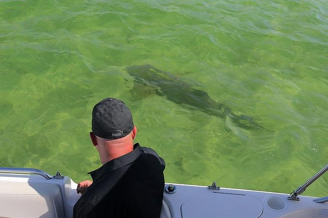 Picture - Shark watching boat tours with Florida Saltwater Adventures