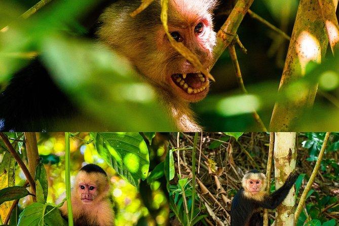 Monkey tour.
