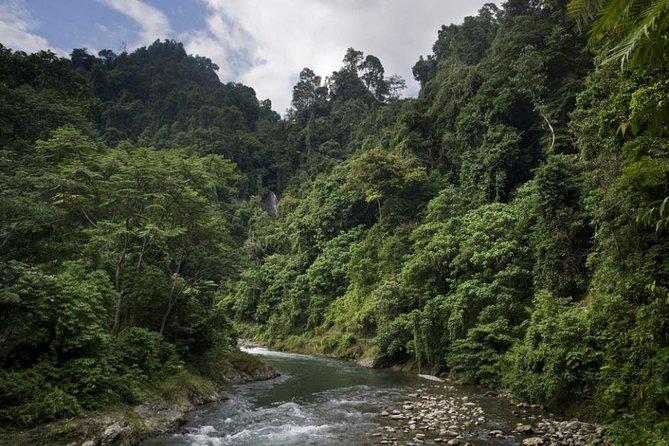2 days overnight Bukit Lawang Orangutan trek