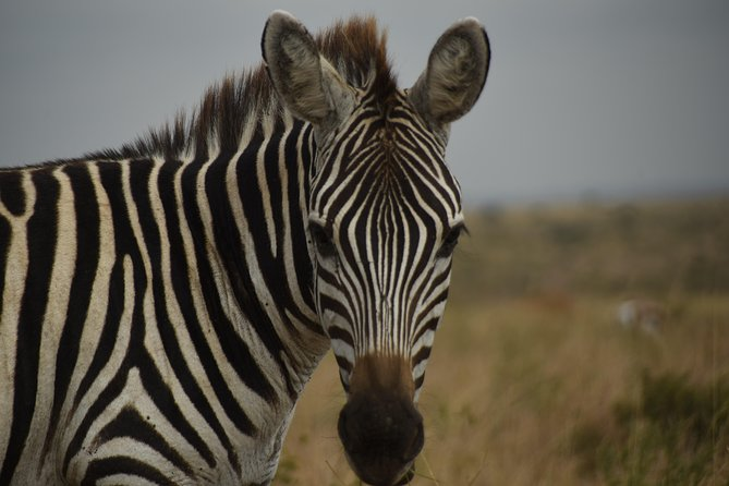 Top Nairobi Tour Highlights Attractions with Lunch and All fees included