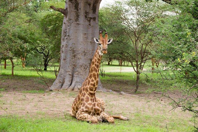 Safari in the Bandia Reserve