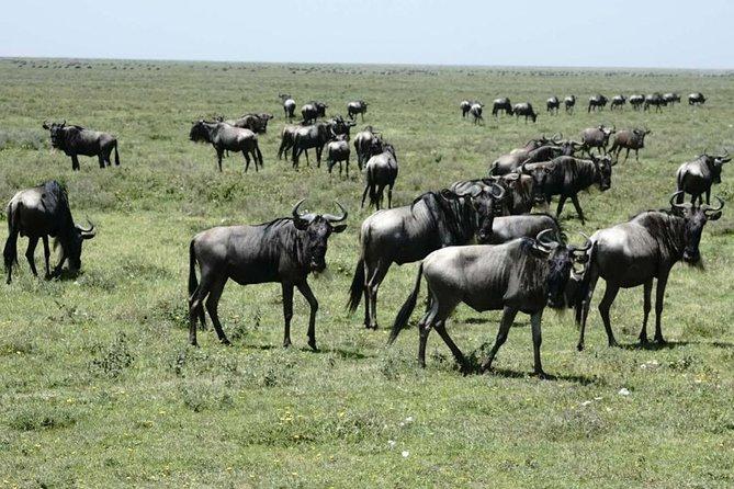 5-Day Tanzania Safari- Lodging Featuring Serengeti