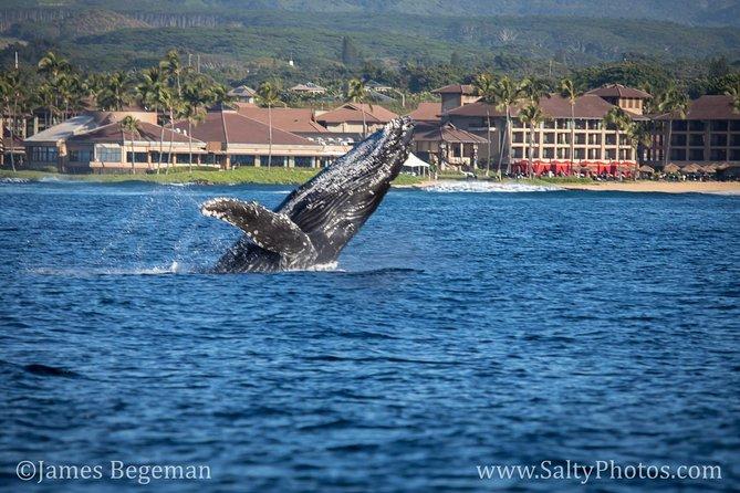 Kauai's Ultimate Whale & Dolphin Zodiac Boat Adventure