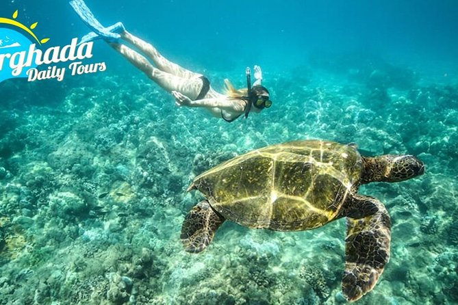 Abu Dabab Bay National Park Swim with Turtles from Hurghada