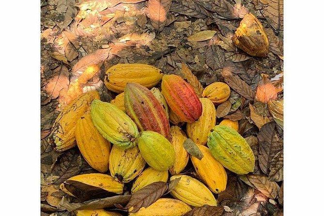 Cacao And Chocolate Trip Fantasy