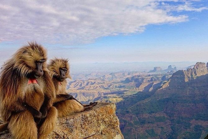 12days Trekking In Simien Mountain & Around Lalibela