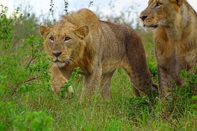 Nairobi National Park Game Drives