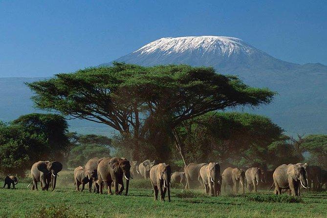 3 Days 2 Nights Amboseli National Park Wild Safari