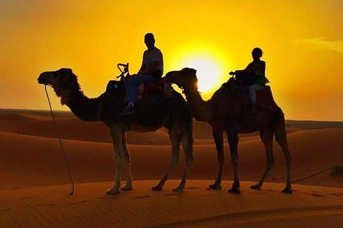 Half Day Sunset Camel Safari
