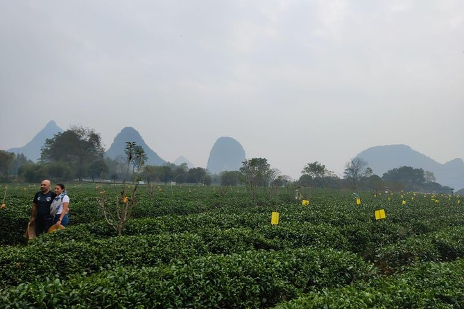 Half-Day Guilin City Tour: Reed Flute Cave and Tea Plantation