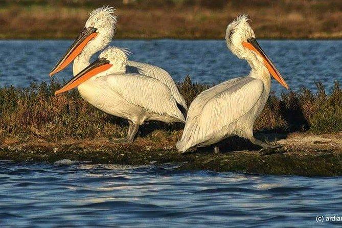 Bird Watching Day Tour in Karavasta