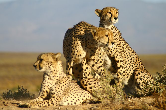 Shared transfers - Cape Town to Inverdoorn Game Reserve excluding entrance fees