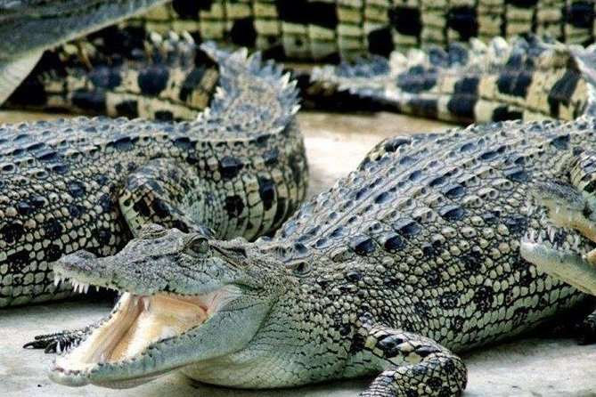 Cape Town. 3days Attraction: Crocodule Cage&cape Point &wine Testing