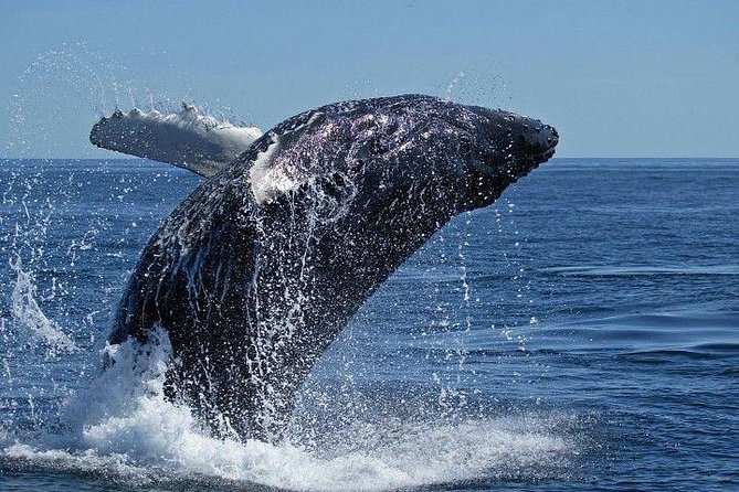 ( Cape Town Private Tour ) Hermanus Whale Watching Full Day