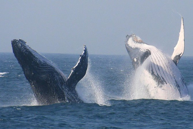 Cape Town Private Tour. Hermanus Whale Watching Full Day