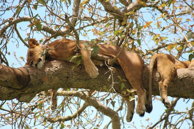 23 Day Uganda Classic Safari Adventure