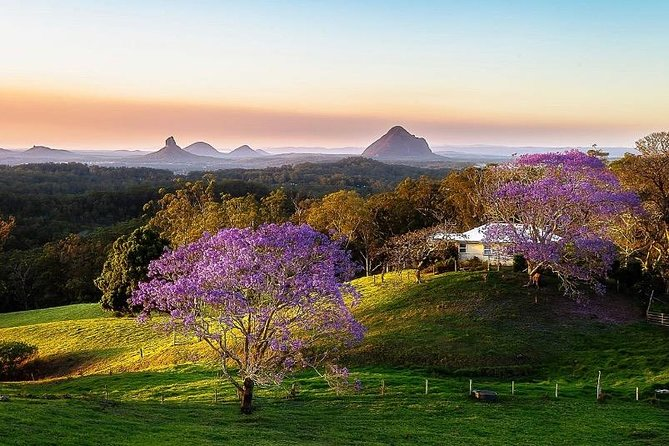 Sunshine Coast Hinterland Sightseeing Tour