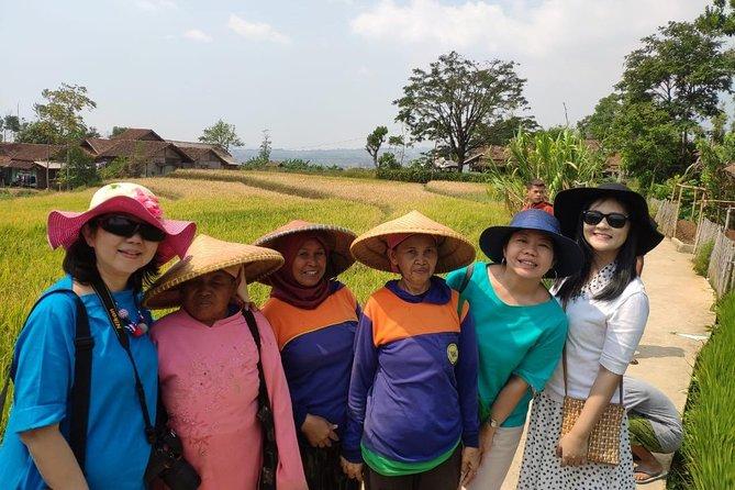 Bamboo Village Puntang Mountain From Bandung