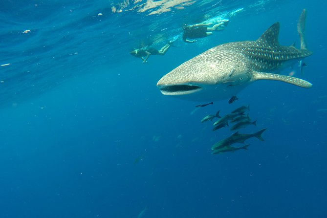 Breath-Hold Diving Initiation (FreeDiving) photo 4