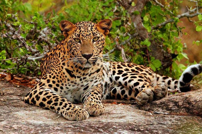 Yala National Park with Experienced Driver/Guide - Private Tour