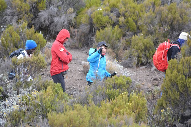 Kilimanjaro Lemosho Route 7 Days