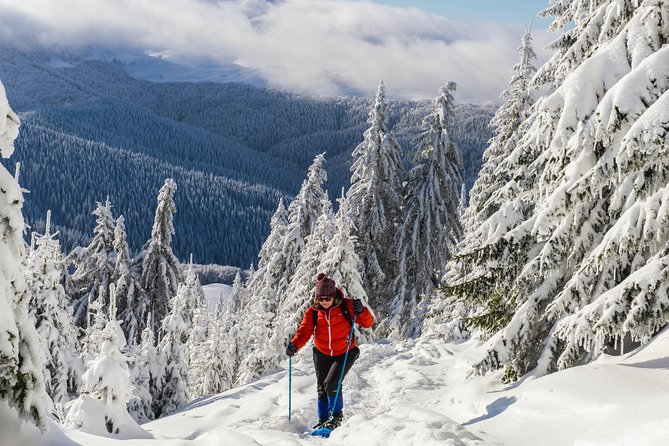 Snowshoeing on the Transylvanian hills - Day trip from Bucharest