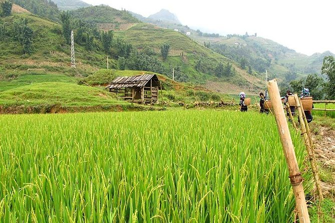 Discover rice fields and nature of Sapa – 1 day