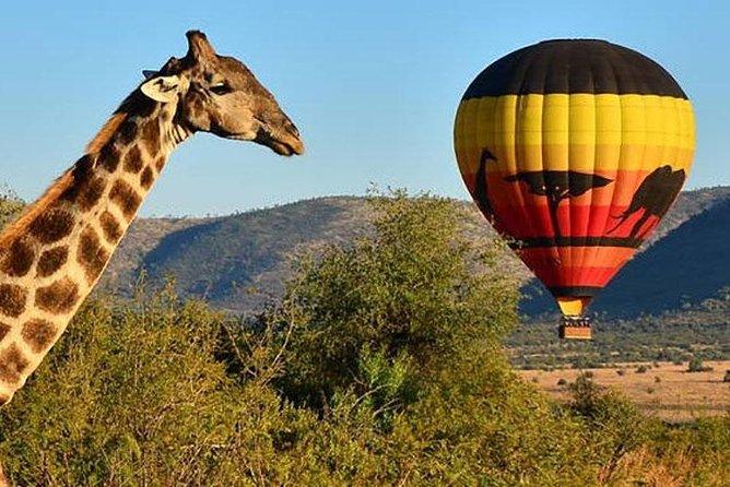 Pilanesberg Full-Day Safari Tour