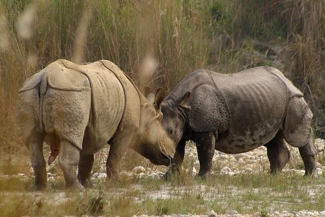 Chitwan Wildlife (Jungle) Safari